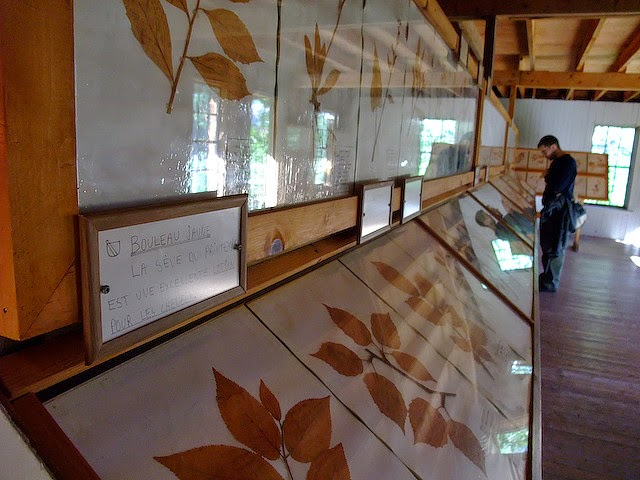 Photo of Cara Membuat Awetan Kering berupa Herbarium dan Insektarium
