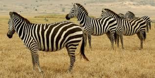Photo of Teori Klasifikasi Makhluk Hidup Menurut Para Ahli