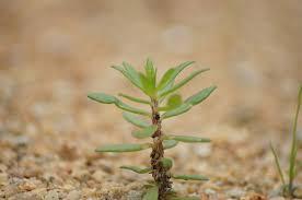 faktor pertumbuhan